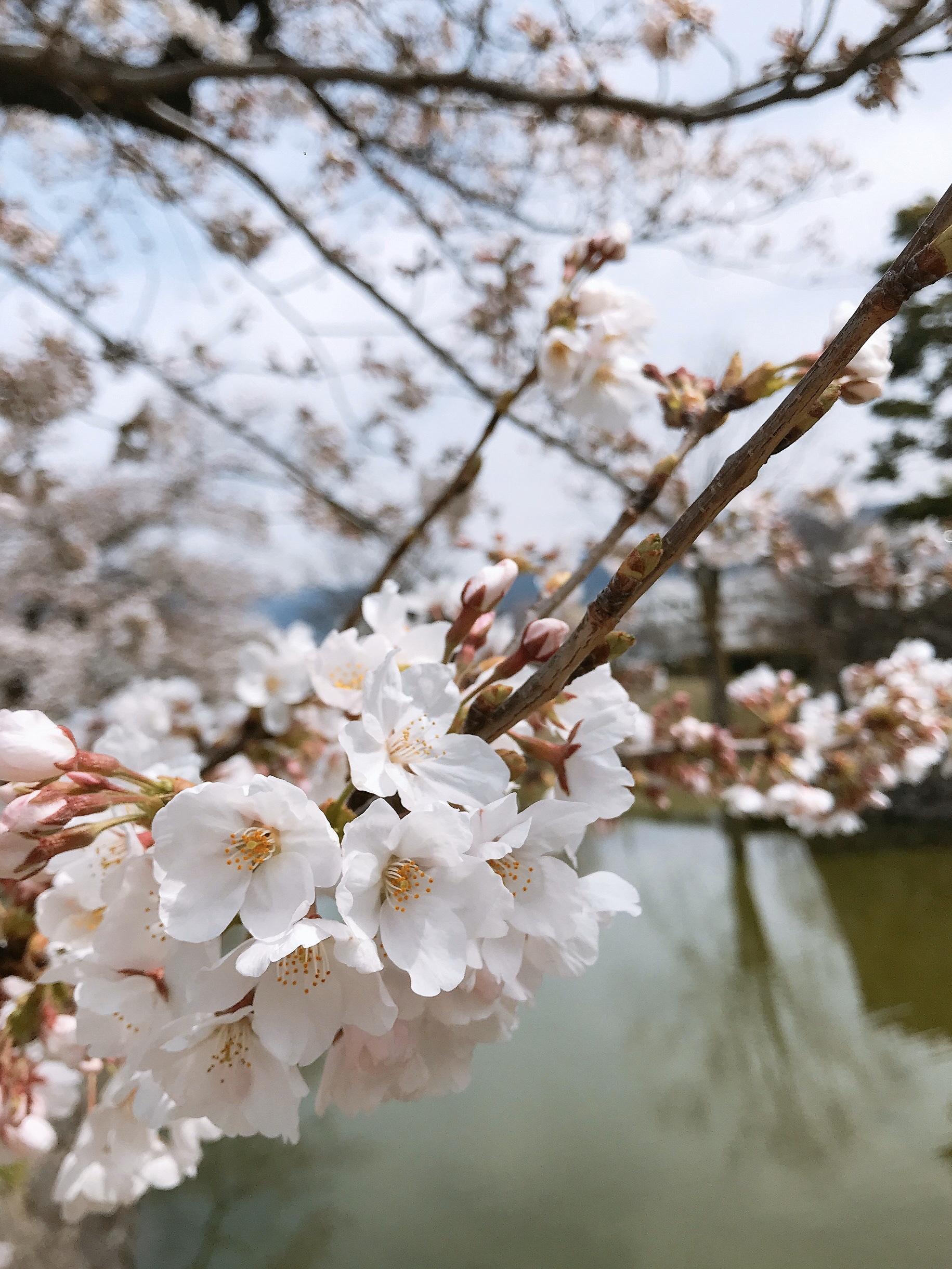 春到来!いつもの景色